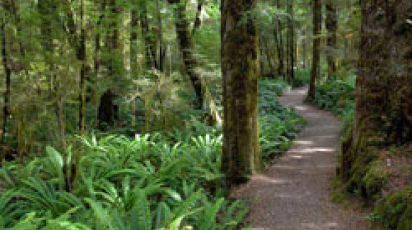 Hepburn Springs explore walking tracks forest